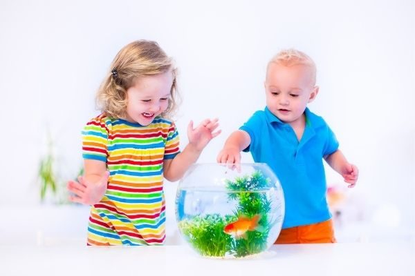 an aquarium: gifts for the child who has everything
