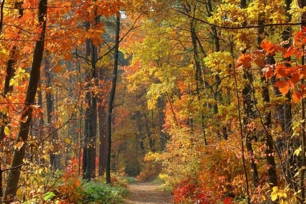 seasons make good topics to talk about with people: fall